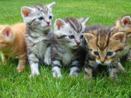 CAT OWNER MUST DO
