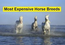 most expensive horse