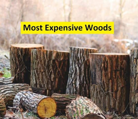 most expensive wood
