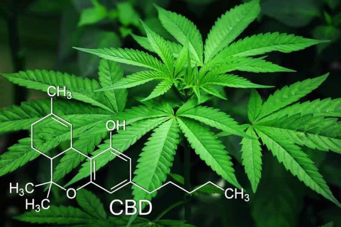 Misconceptions About Hemp