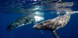 Whales Help Our Planet