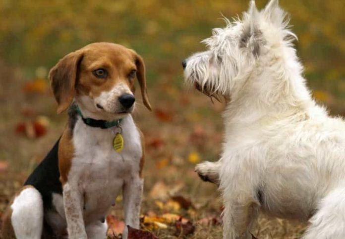 Dog Breeds Differ