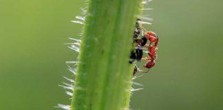 Safer Pest Control