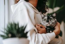 Cat Attention and Love
